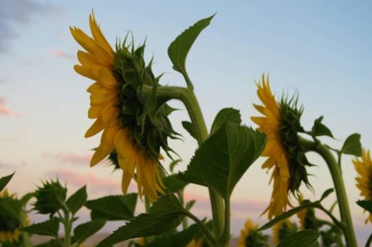 В Оренбургской области задержали граждан, пытавшихся похитить у фермера 44 тонны семян