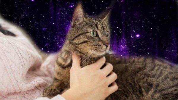 Здоровью ног кот помог: Чем помогают коты, сидя на коленях у хозяина