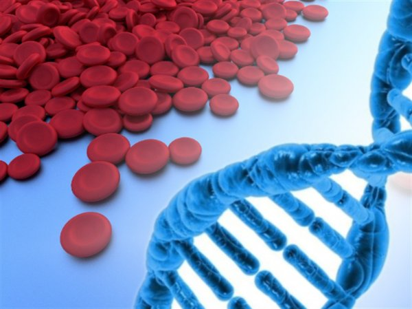 Учёные выяснили происхождение современного гемоглобина