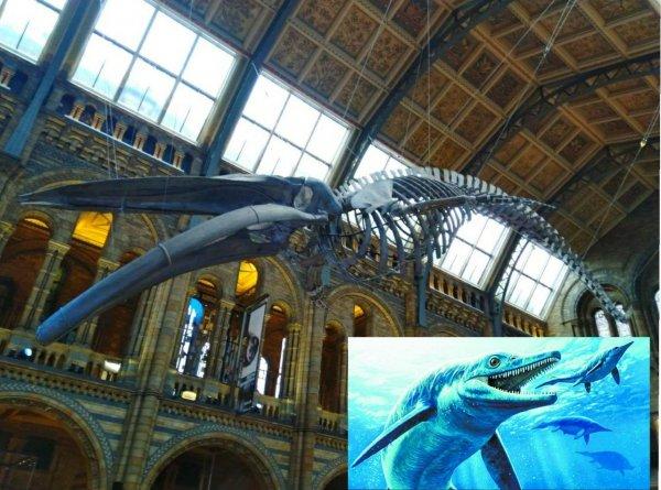 Селфи-палка помогла палеонтологам в исследовании вымерших ихтиозавров
