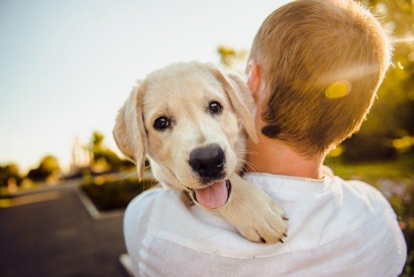 Гарвардские учёные доказали, что собака защищает сердце своего хозяина