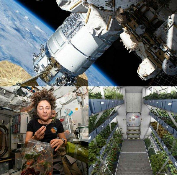 Российские специалисты рассказали о проработке новой оранжереи для МКС