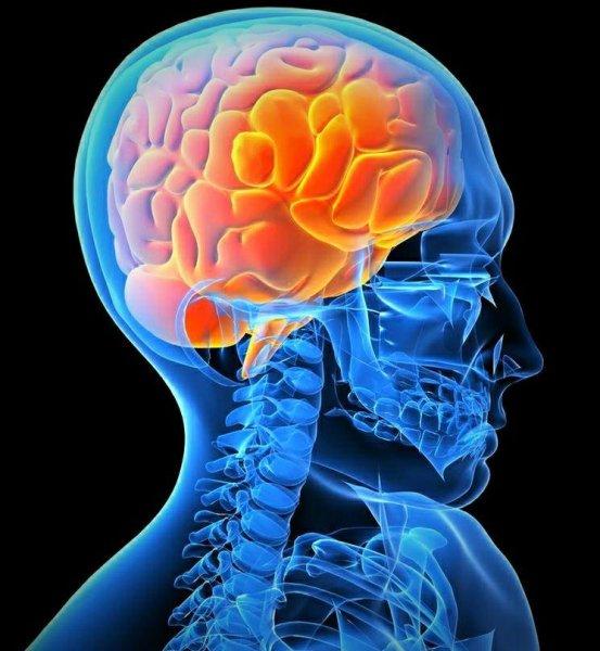 Учёные создали новый способ диагностирования заболеваний мозга