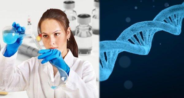 Учёные выявили опасность метода редактирования гена эмбриона человека