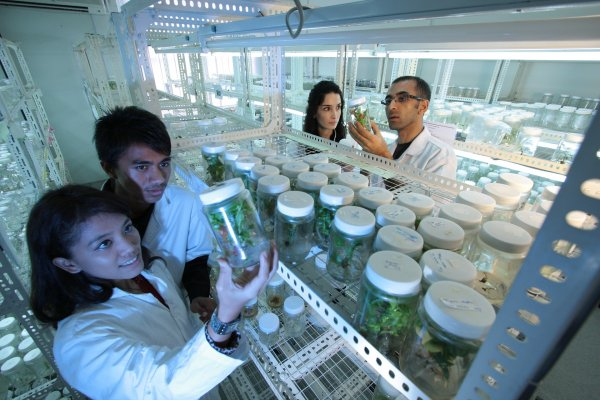 Сингапурские ученые обнаружили в организме белок, предсказывающий развитие онкологии