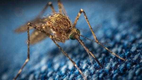 Аллерголог: Расчёсывание укуса комара может вызвать инфекцию