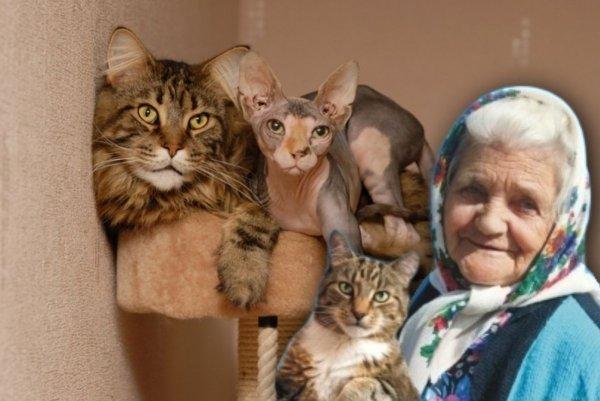 Замедлить старость котом: Названы 3 породы кошек, омолаживающих владельцев