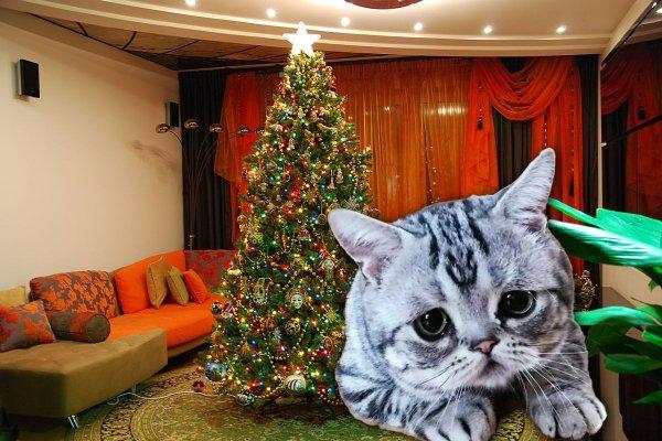 «Барсик умер из-за ёлки»: Москвичка смертью кота выяснила опасность долгого хранения дерева