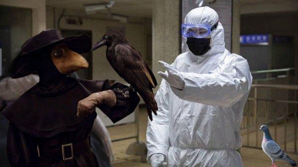 Чума 21-го века: Коронавирус из Китая угрожает животным и фауне России – учёные