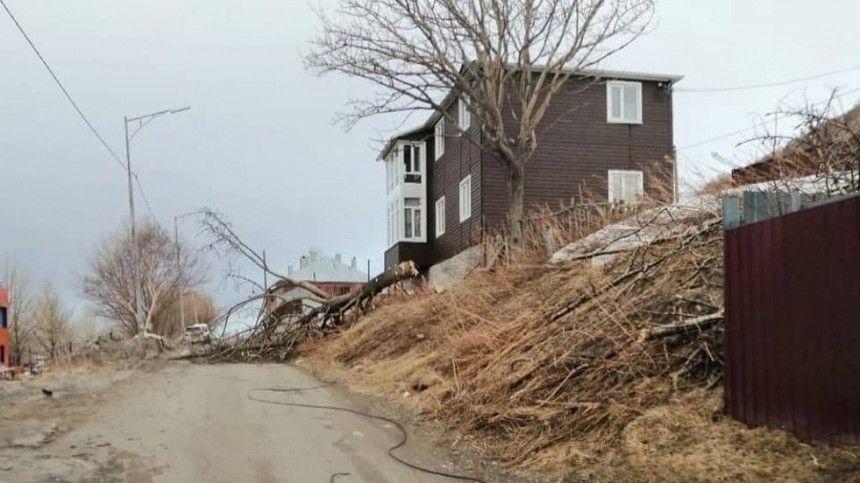 Штормовой ветер на Камчатке срывает обшивку с домов и валит деревья — видео