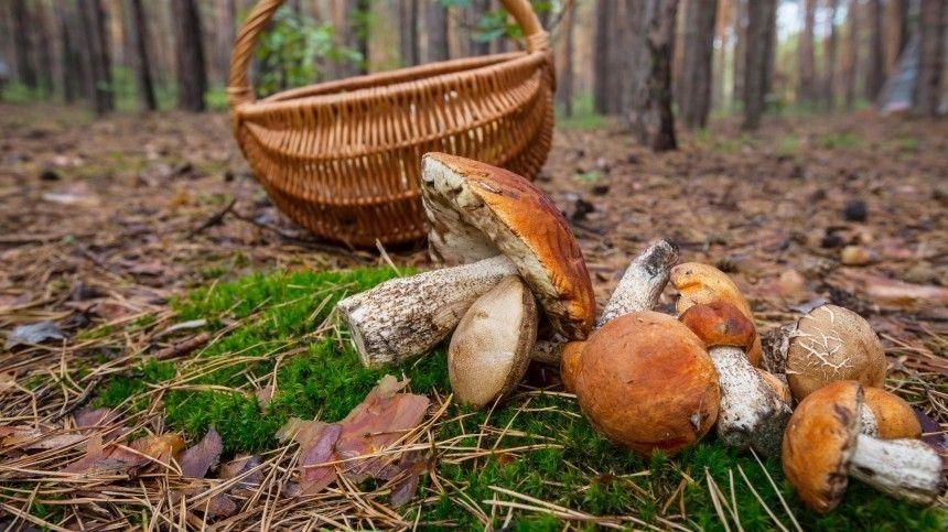 В Госдуме отреагировали на идею ужесточения правил сбора грибов для граждан