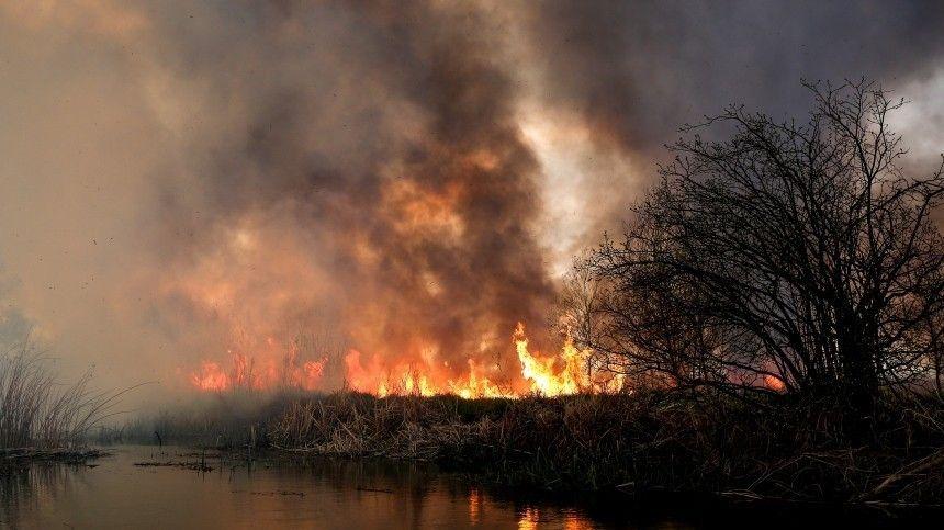 Прокуратура заинтересовалась последствиями мощного пожара в природном парке «Хасанский»