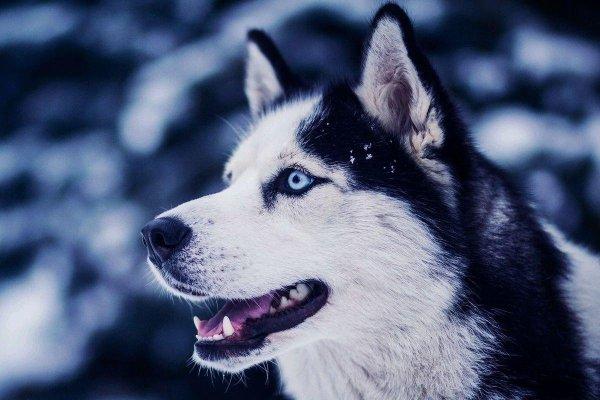 Чувство справедливости у собак не зависит от породы