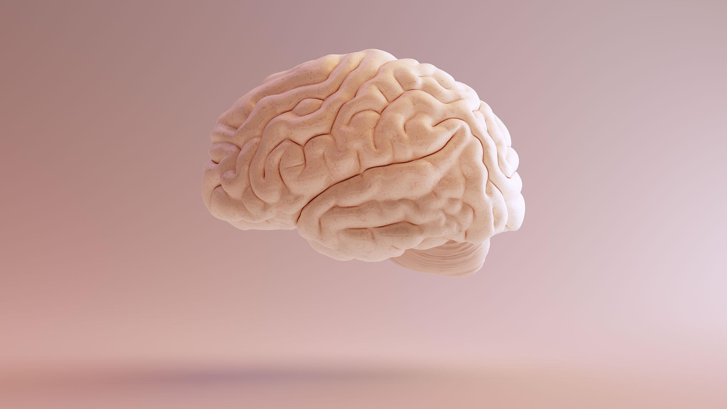 Найден способ сохранить работу мозга после травм и постоянного недосыпа
