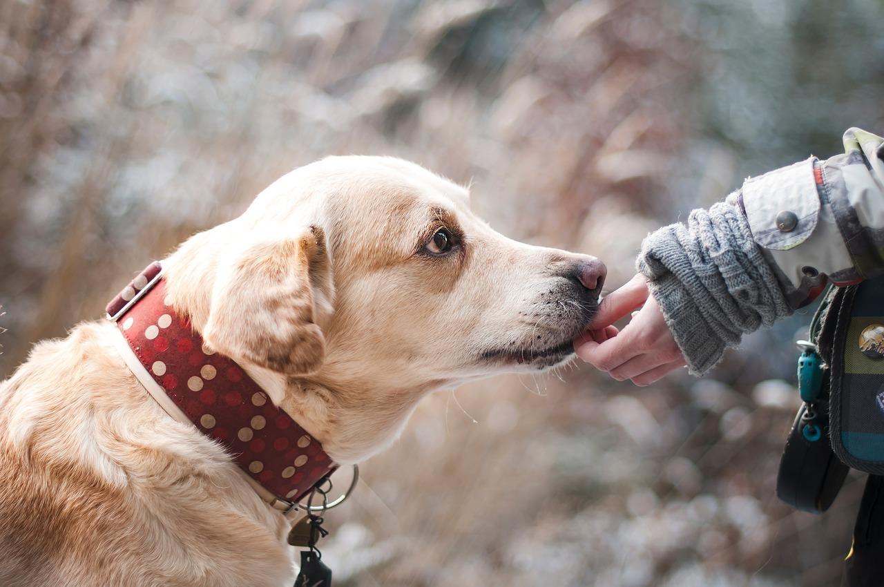 Дрессировку собак через наказания признали вредной