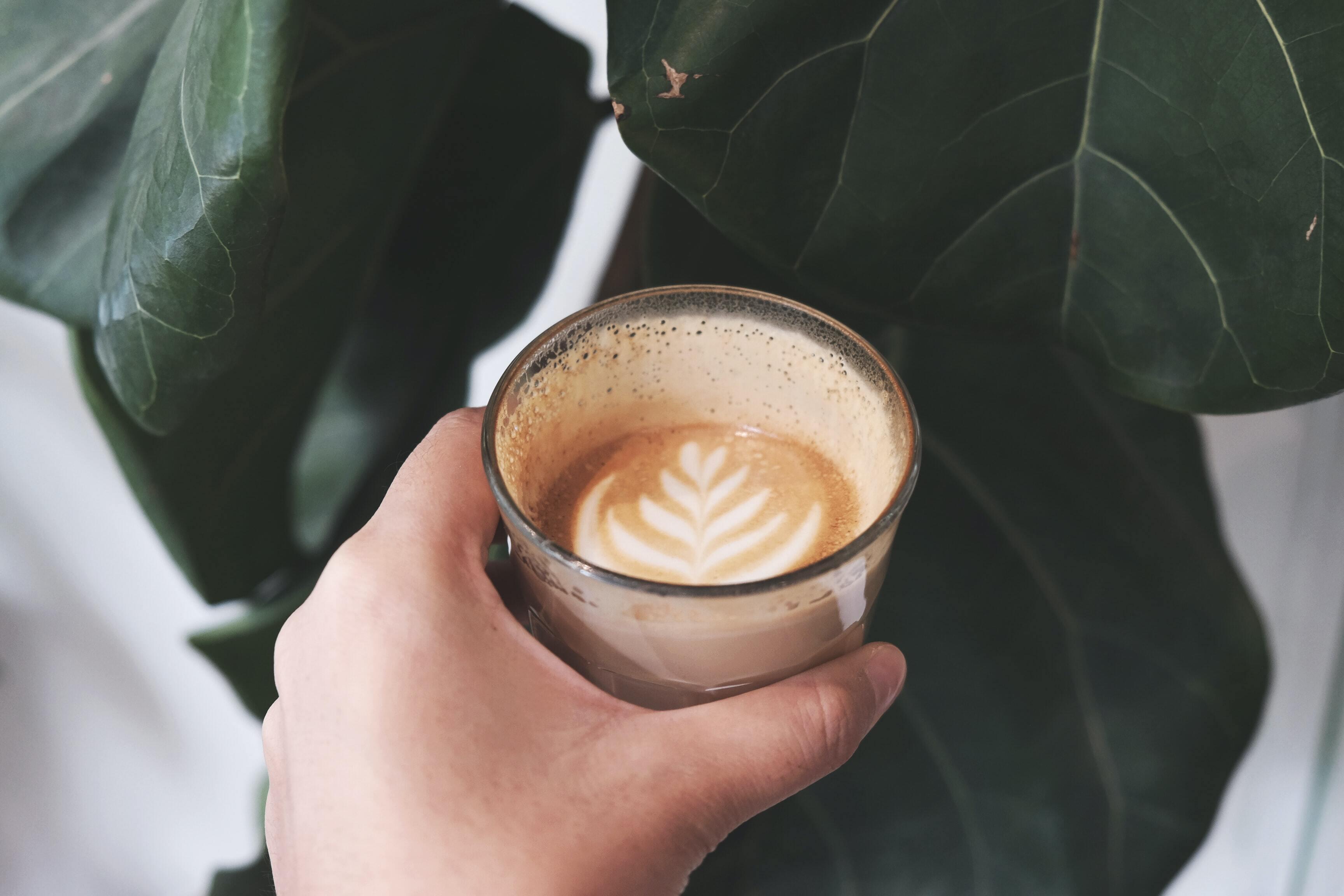 Учёные определили самый опасный вид кофе для природы