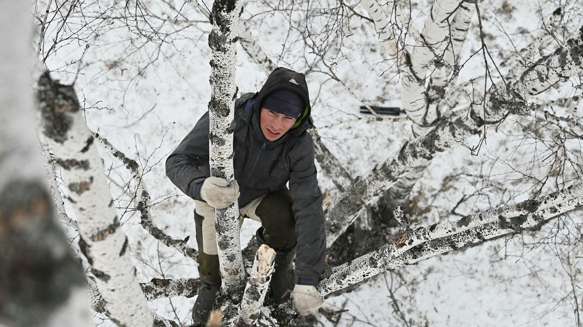 Россиянин получил травму, забравшись на берёзу ради доступа в интернет