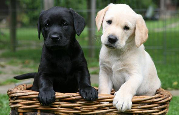 Собаки оказались способны выучить новые слова после четырёх повторений