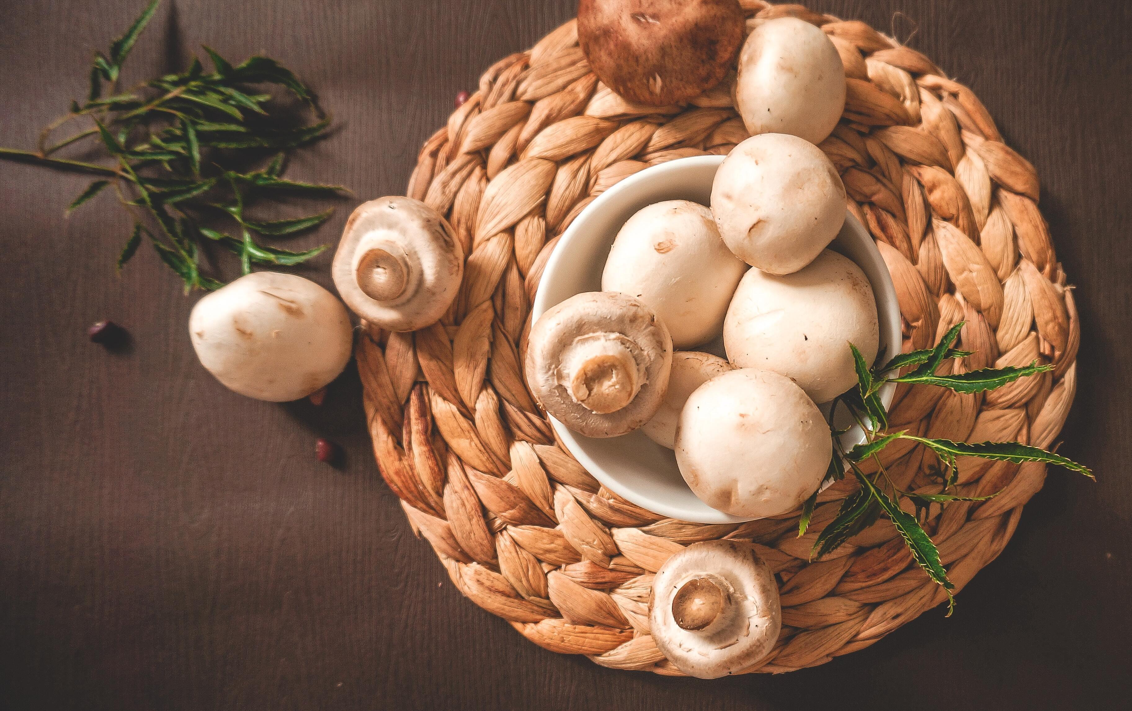 Учёные объяснили пользу грибов для организма