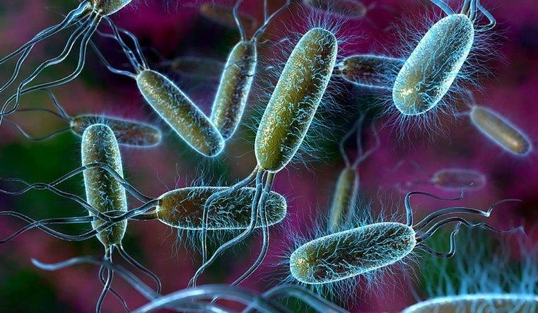Учёные обнаружили земные бактерии, не известные человеческому иммунитету