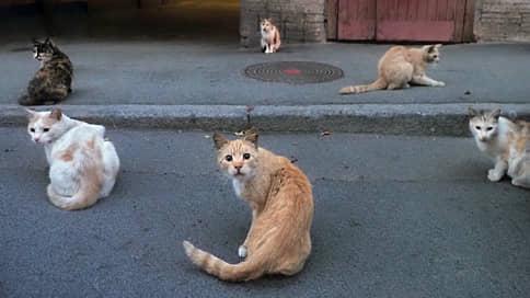 Бездомным животным дадут государственную крышу // Минприроды разрабатывает проект по строительству типовых приютов
