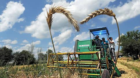 Цены висят на колоске // Стоимость российской пшеницы бьет многолетние рекорды