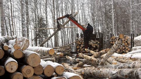 Лес загрузят в интернет // Депутаты одобрили поправки к Лесному кодексу