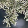 В Омской области ожидают заморозки до -5 градусов