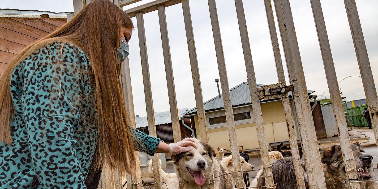 Почти три тысячи волонтеров помогают заботиться о животных в городских приютах