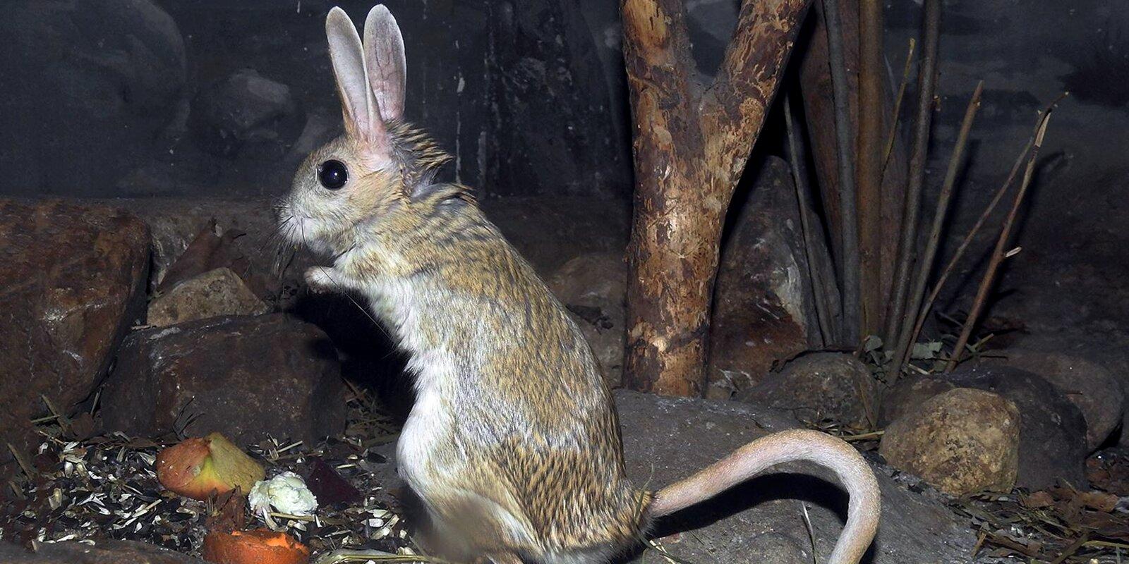 Хранители снов: как в Московском зоопарке ухаживают за животными в спячке