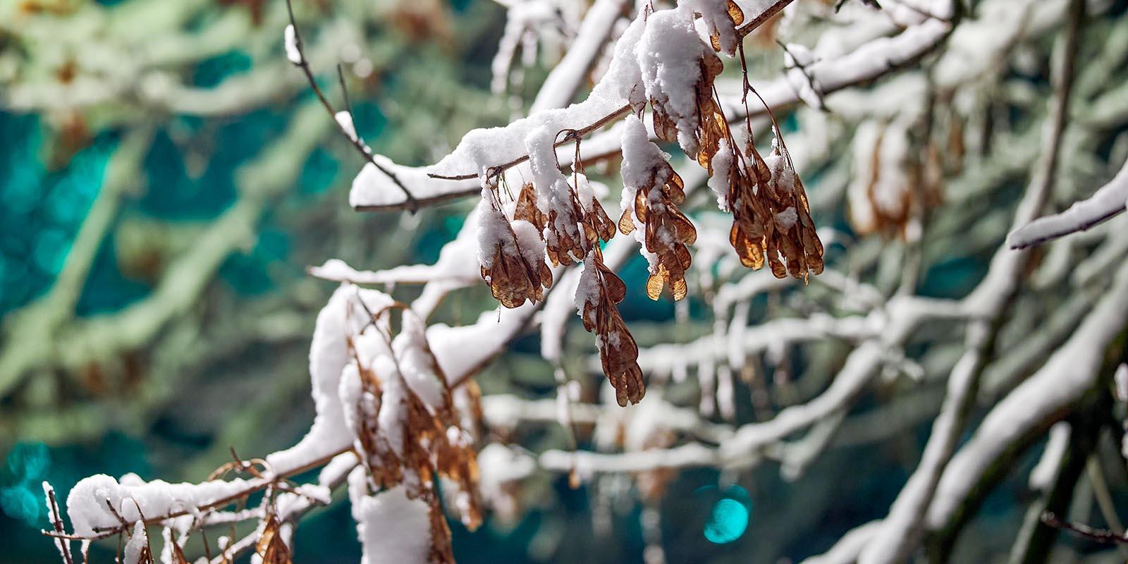 Ожидается снегопад: городские службы готовы к непогоде