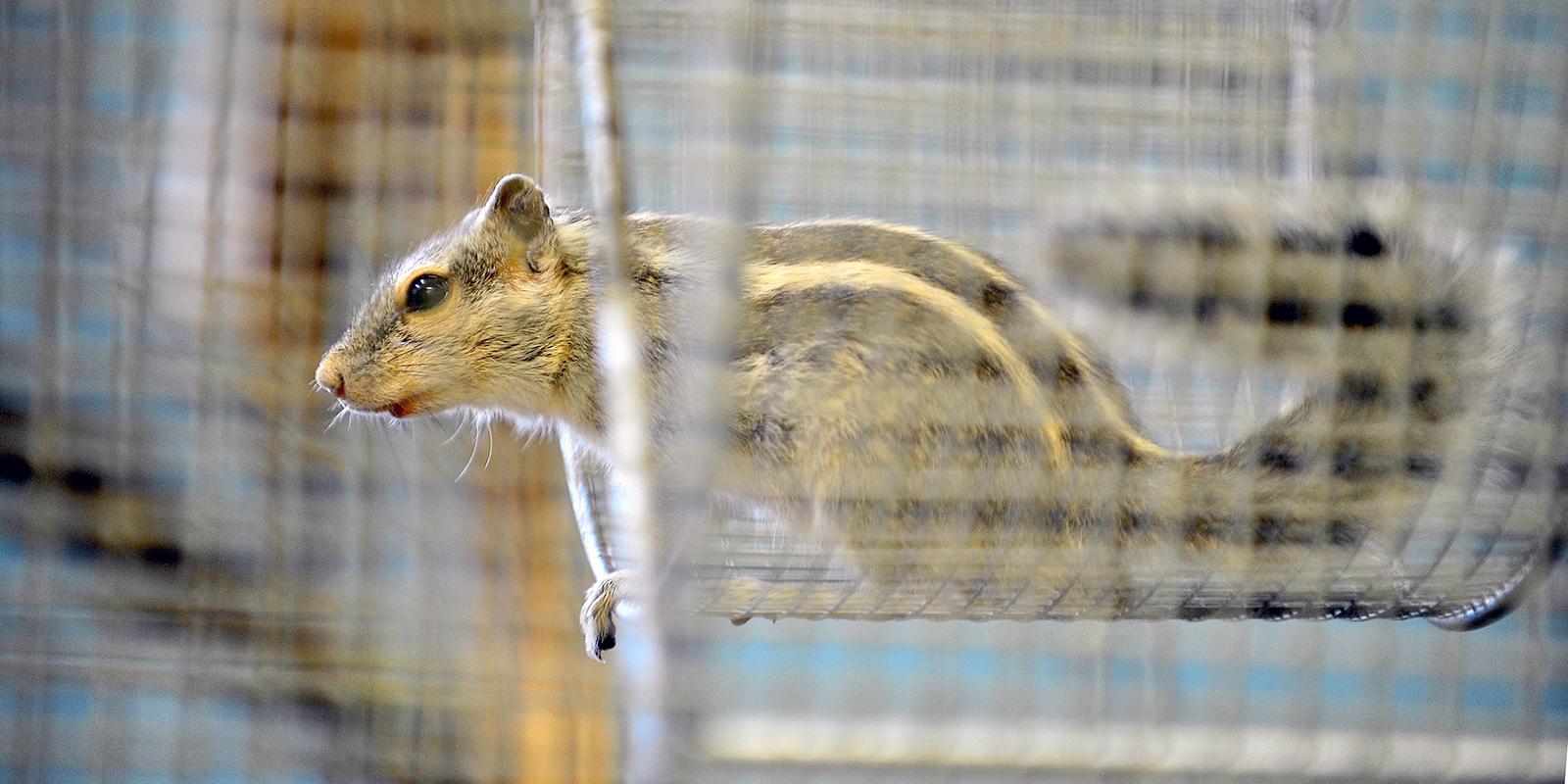 Бурундуки в Московском зоопарке впали в зимнюю спячку