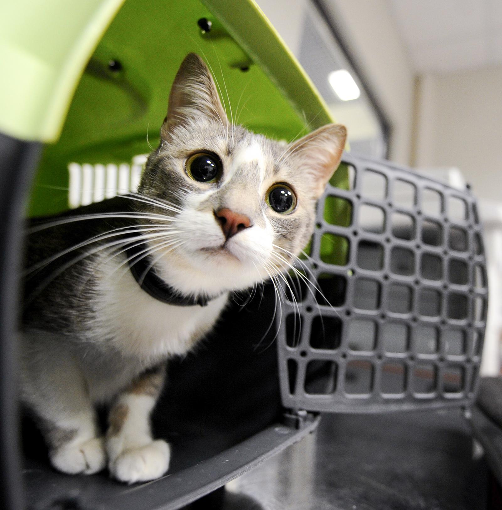 Сергей Собянин рассказал о развитии городских сервисов для владельцев домашних животных