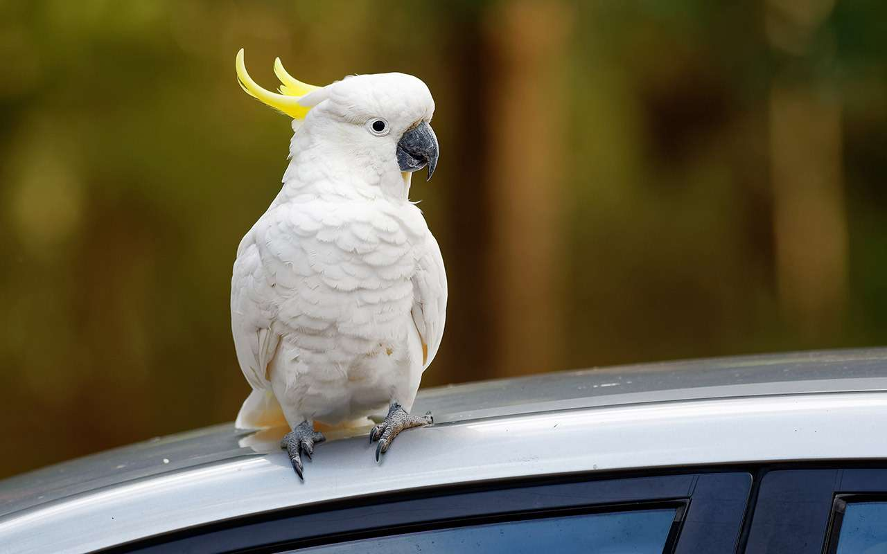 Как правильно перевезти птицу — 5 советов эксперта