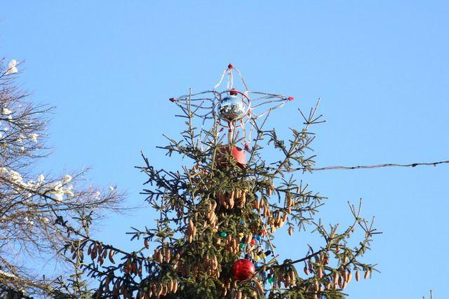 На главную брянскую ёлку повесят тысячу шаров