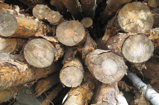 Вопросы древесины. «Единая Россия» предлагает поправки в Лесной кодекс