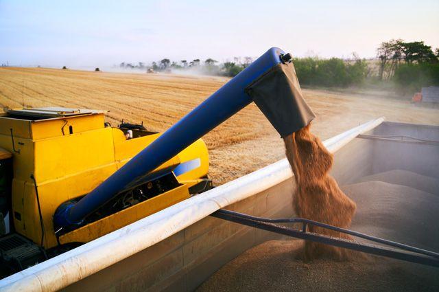 Россия планирует ввести вывозную таможенную пошлину на пшеницу