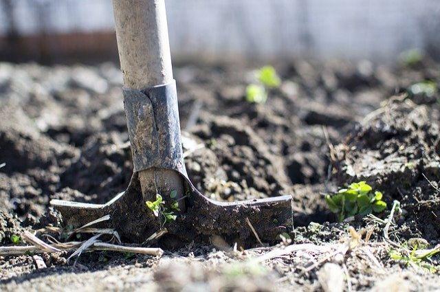 Брянское аграрное предприятие наказали за нарушение плодородного слоя почвы