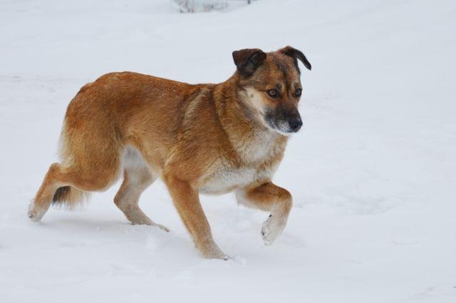 Депутат Госдумы обратится в прокуратуру из-за обнаружения «цветных собак»