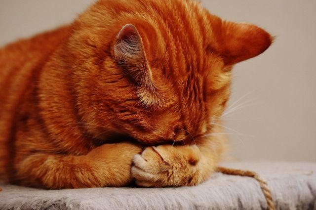 На Шпицбергене умер знаменитый кот Кеша
