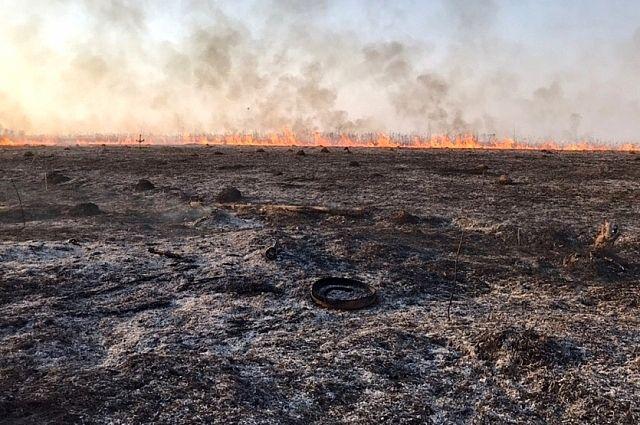 Кабмин предлагает лишать фермеров субсидий за сжигание травы