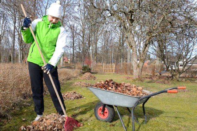 Первая обработка. Как обезопасить сад от вредителей и болезней весной