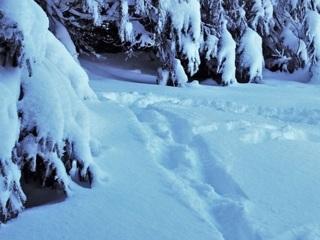Под Воронежем 73-летний пенсионер пошел в лес за елкой и пропал на 19 часов