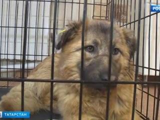 В Казани спасли собаку с арбалетной стрелой в шее