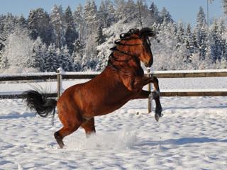 Лошадь на конюшне под Иваново тяжело травмировала 11-летнюю девочку