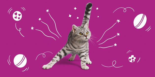 Что нужно знать о кошках старше 7 лет