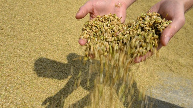 Asia Times (Гонконг): сможет ли Россия доминировать в мировом сельском хозяйстве?