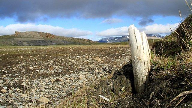 The Wall Street Journal (США): самая старая в мире ДНК раскрывает тайны генеалогии мамонтов из ледникового периода