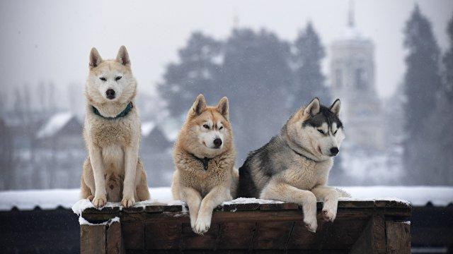 Svenska Dagbladet (Швеция): собака понимает нас гораздо лучше, чем мы думали