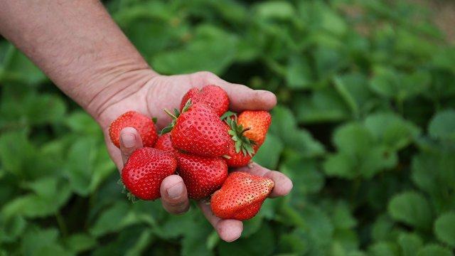 ABC (Испания): в чем разница между клубникой и садовой земляникой? Полезные свойства и интересные рецепты